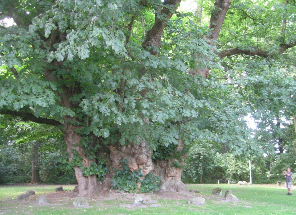 Bomen als kostenpost