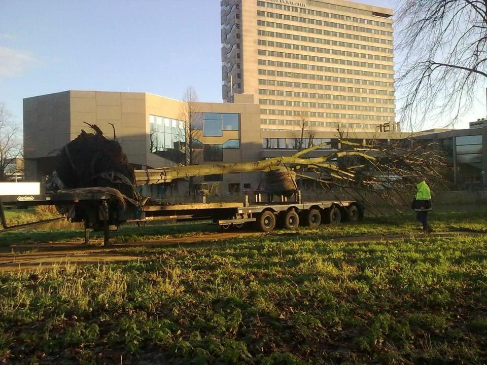 Verplanting linden Burgemeester Oudlaan operatie inrit EUR stichting De Bomenridders Rotterdam