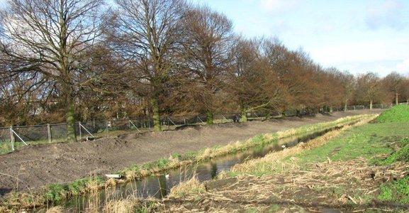 Verplante linden langs Zwarteweg, gemeente Berkel en Rodenrijs stichting De Bomenridders
