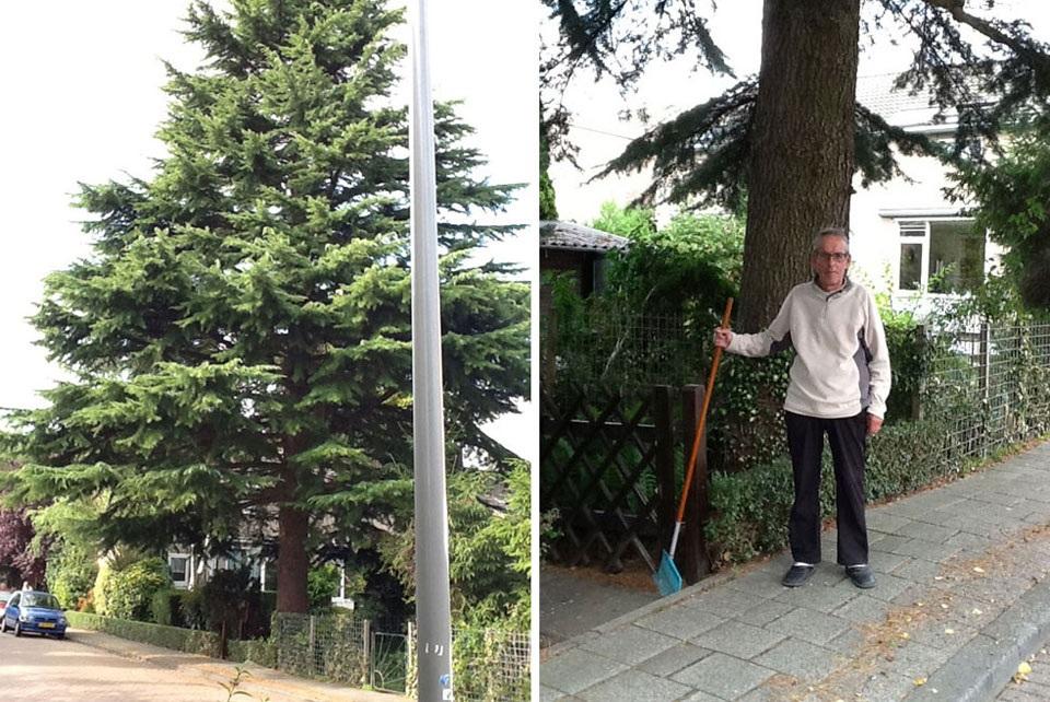 Bomen Tuindorp Vreewijk stichting De Bomenridders Rotterdam