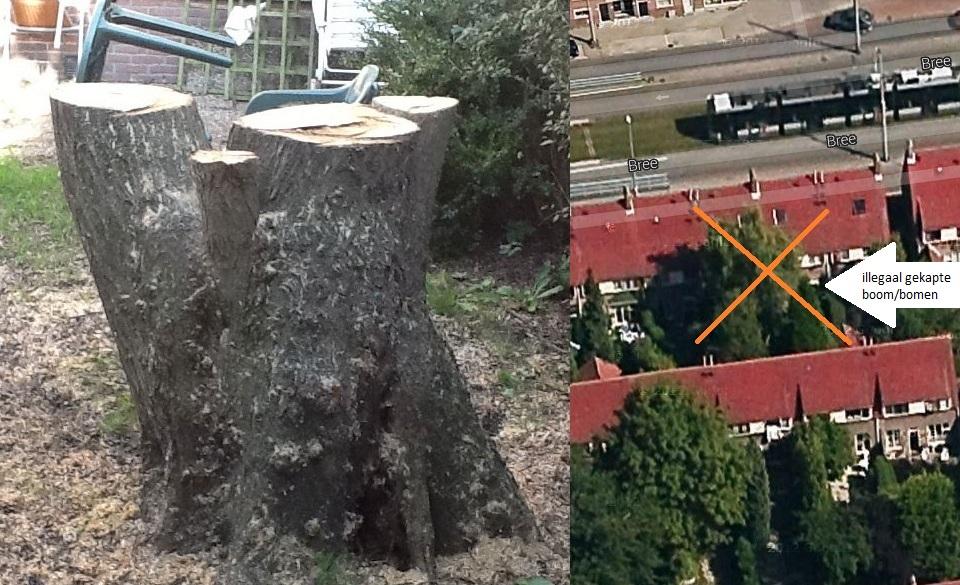 Illegaal gekapte boom/bomen in de achtertuin van Bree 186 stichting De Bomenridders Rotterdam