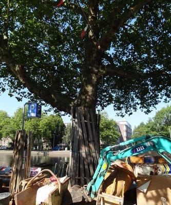 Platanen Linker Rottekade vernieuwing kademuren stichting De Bomenridders Rotterdam