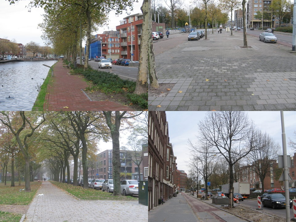 Schouw bomen en projecten Crooswijk, 11-11-2013, stichting De Bomenridders