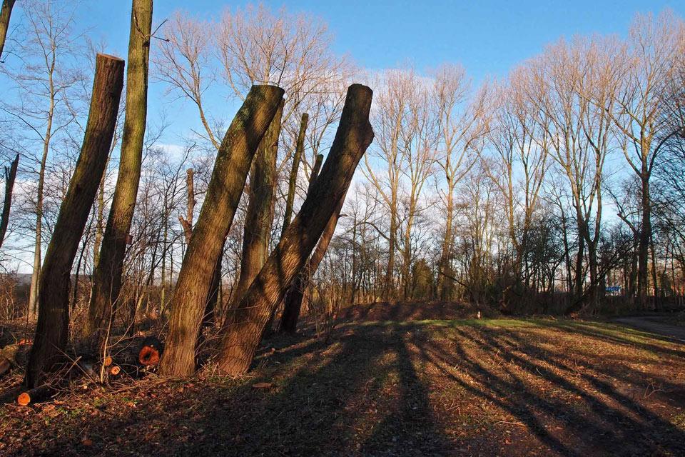 Vroesenpark deelgemeente Noord: kaalslag of keurig onderhoud? stichting De Bomenridders Rotterdam