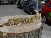 22 bomen te veel gekapt aan de burgemeester Baumannlaan in Overschie stichting De Bomenridders Rotterdam
