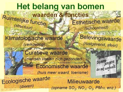 Waarden en functies van bomen stichting De Bomenridders Rotterdam
