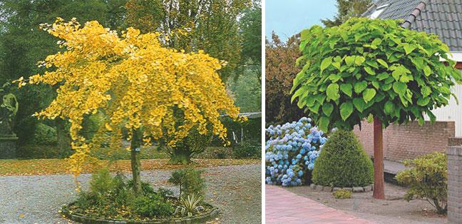 Lage bomen tuin