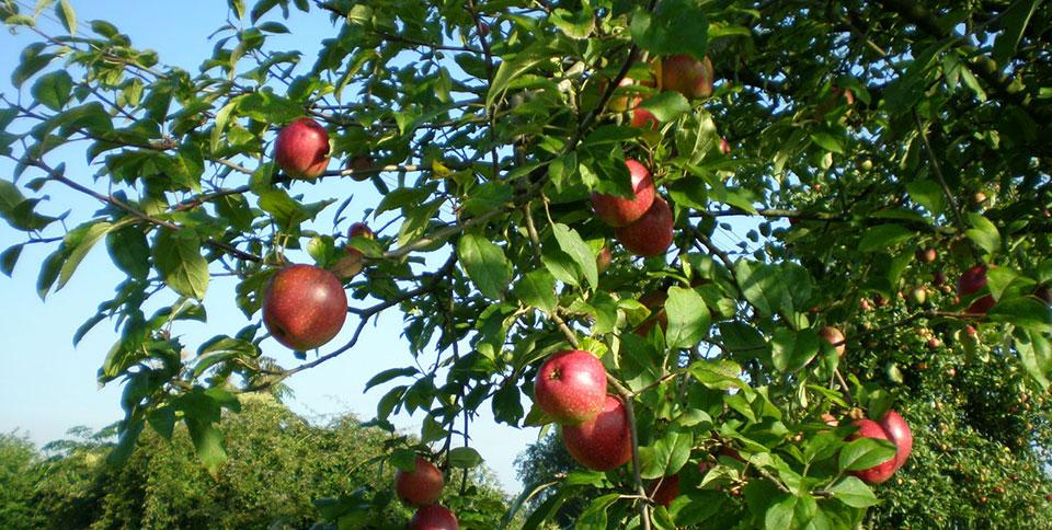 Boom Kleine Tuin : Bomen voor kleine tuinen de bomenridders rotterdam