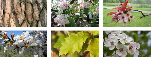 Enkele afbeeldingen uit de quiz van april 2014