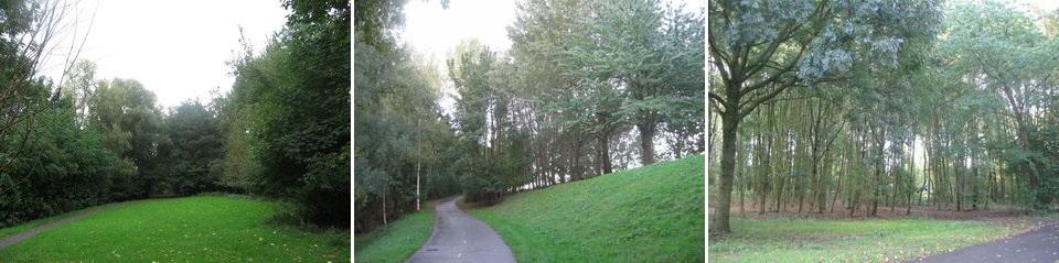 """De groenstrook langs de A16 ter hoogte van de wijk Beverwaard vormt een buffer voor de achterliggende omgeving. Door het gebied lopen fiets- en wandelpaden. Sinds de aanleg van het groen 25 jaar geleden heeft echter geen onderhoud plaatsgevonden, zodat dat nu nodig moet gebeuren. Beheerder Richard van Motman: """"Dit zie je nu: dunne, lange staken. Daar moet je iets mee."""" Voor een groot deel zullen de werkzaamheden uit dunnen bestaan. Maar er zullen ook bosplantsoenvakken worden gerooid, met name de vakken die uit een monocultuur van populieren bestaan."""