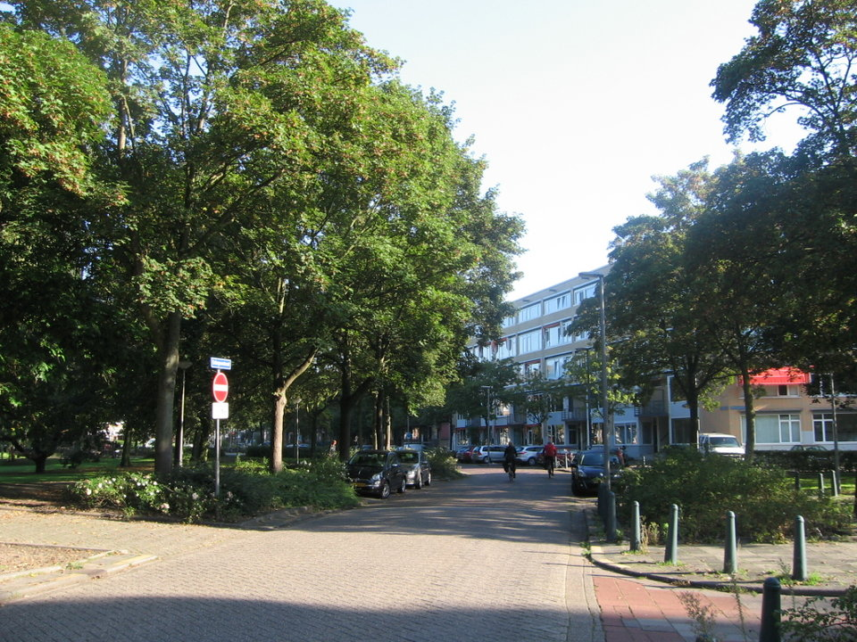130 bomen weg Schepenstraat? Stichting De Bomenridders Rotterdam