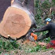 Voer kapvergunning voor tuinbomen weer in