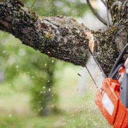 Bescherming van bomen en illegale kap