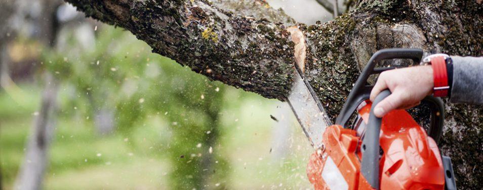 Bescherming van bomen en illegale k...