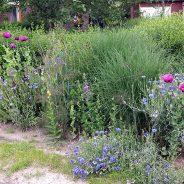 Zienswijze ingediend tegen verstening tuinen